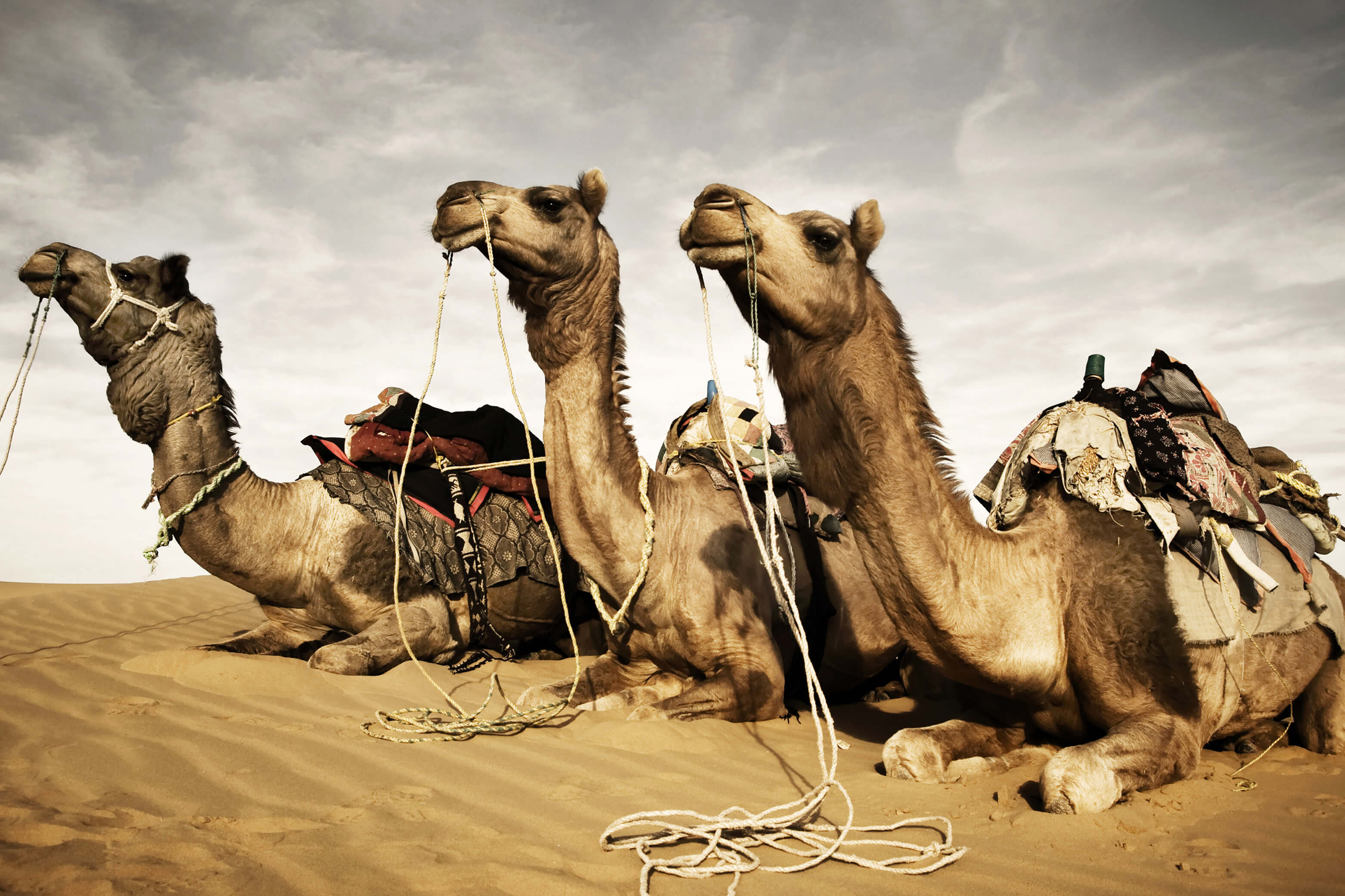 Woestijnschepen